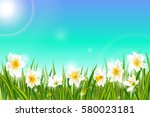 Spring Background With Daffodi...
