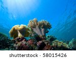 underwater life | Shutterstock . vector #58015426