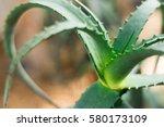 aloe vera close up. the image... | Shutterstock . vector #580173109