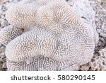 Coral Texture