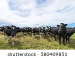 Crowded Cows In Green Pasture...