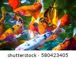 Colorful Koi Fish With Water...