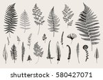 set ferns. vintage vector... | Shutterstock .eps vector #580427071