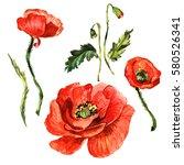 wildflower poppy flower in a... | Shutterstock . vector #580526341