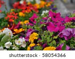 Various Different Flowers With...