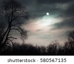 Mysterious Forest. Night In Th...