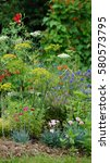 Small photo of Wildflower mix growing on an English allotment garden in August