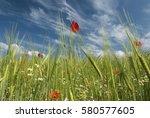 beautiful wild flowers growing... | Shutterstock . vector #580577605