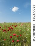 brightly coloured poppies and... | Shutterstock . vector #580577719