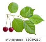 Two Ripe Cherries On A Tree...