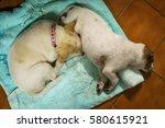 two little puppy sleeping | Shutterstock . vector #580615921