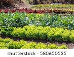 vegetable garden color green... | Shutterstock . vector #580650535