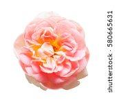 Beautiful Flower Pink Rose...