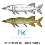 pike  predatory freshwater fish ...   Shutterstock .eps vector #580670851
