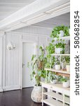 a bright room with wood trim painted in white and green plants stand on the floor in iron vases painted in white vintage color. the room is lit from the window - stock photo