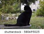 Stock photo black cat on the bench 580695025