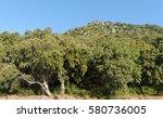 cork oak forest in upper...   Shutterstock . vector #580736005
