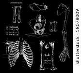 Human Bones  Vintage Vector Set
