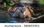 beaver in a pond in hinton ... | Shutterstock . vector #580855501