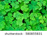 Bear Clover Leaf Green...