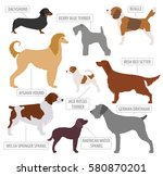 hunting dog breeds collection... | Shutterstock .eps vector #580870201