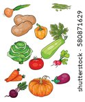 set of ripe vegetables and root ... | Shutterstock .eps vector #580871629