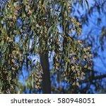 Hundreds Of Monarch Butterflie...