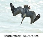 Close Up Of A Brown Pelican  ...