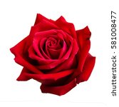 Stock photo red rose isolated on white background 581008477