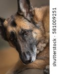 german shepherd  sitting on the ... | Shutterstock . vector #581009251