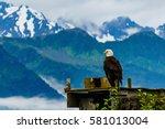 alaskan eagle in seward alaska | Shutterstock . vector #581013004