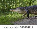 Alligator At Brazos Bend State...