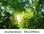 shooting backlit trees japanese ... | Shutterstock . vector #581109061