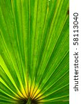 Coconut Leaf Background