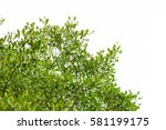 green leaves isolated on white... | Shutterstock . vector #581199175