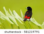 tanager from tropic forest.... | Shutterstock . vector #581219791
