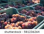 Grape. Harvest. Morning Light