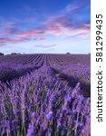lavender field summer sunset... | Shutterstock . vector #581299435