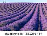 lavender field summer sunset... | Shutterstock . vector #581299459