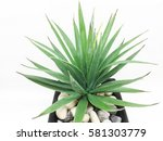 agave isolated on white... | Shutterstock . vector #581303779