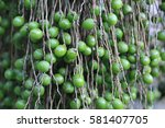 Small photo of Mauritius: fruits of Christmas Palm (adonidia merrillii)