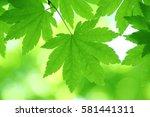 leaves of fresh green. leaves... | Shutterstock . vector #581441311