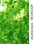 leaves of fresh green. leaves... | Shutterstock . vector #581441329