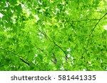 leaves of fresh green. leaves... | Shutterstock . vector #581441335