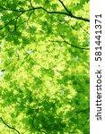 leaves of fresh green. leaves... | Shutterstock . vector #581441371