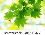 leaves of fresh green. leaves... | Shutterstock . vector #581441377