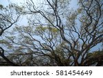 The Silk Tree With Branch  The...