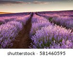 beautiful lavender field at... | Shutterstock . vector #581460595