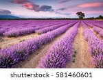 remarkable lavender field at... | Shutterstock . vector #581460601