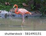 Flamingo Bird Standing In Wate...